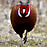 Ring-Necked Pheasant chicken