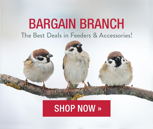 Visit our Bargain Branch for the best deals in feeders and accessories