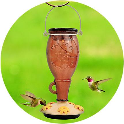 Hummingbirds Feeding at Feeder