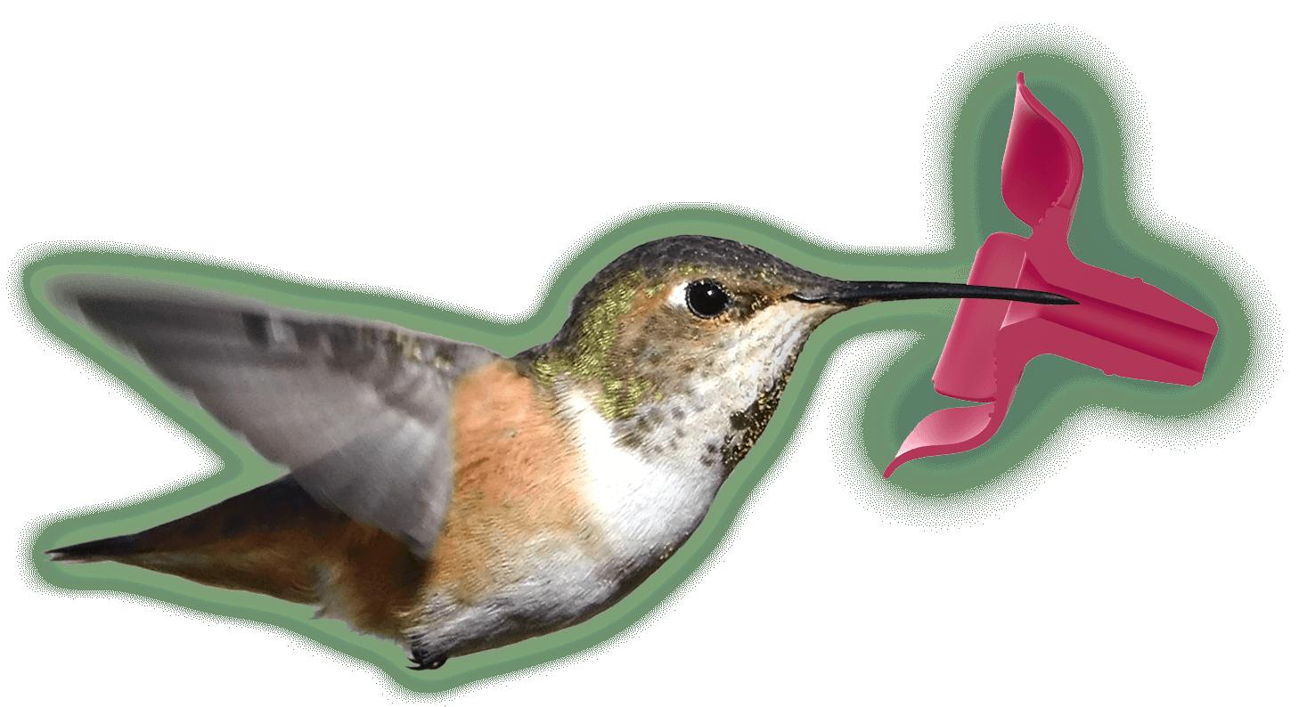 Diagram of Hummingbird Feeding from soft, flexible feeding port