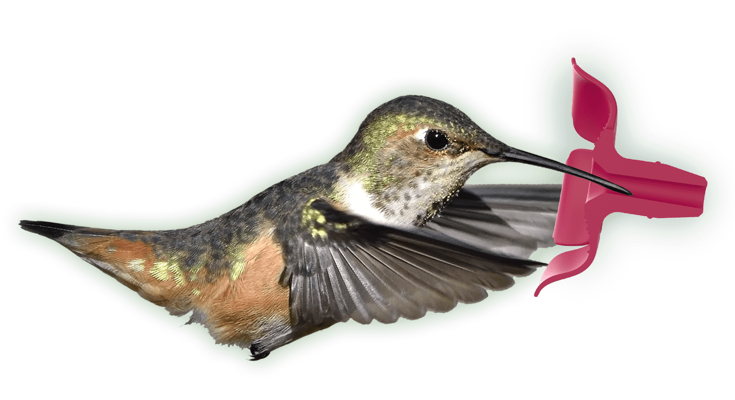 Diagram of Hummingbird Feeding from soft, flexible feeding port
