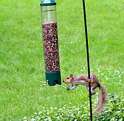 Anti-squirrel feeder