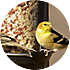 how to select your bird feeders