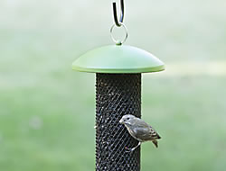 Perky-Pet® Sunflower Tube Wild Bird Feeder