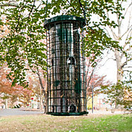 Perky-Pet® Squirrel Stumper® Bird Feeder