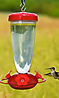 Caring for your bird feeder, caring for your hummingbird feeder