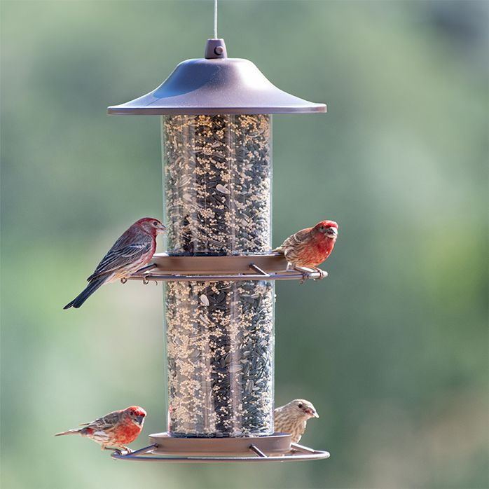 Details about  /2 Lbs Panorama Wild Bird Feeder Food Dispenser Hanging Attract Birds Heavy Duty