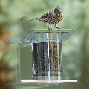 window bird feeder with thistle