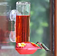 Window bottom fill hummingbird feeder