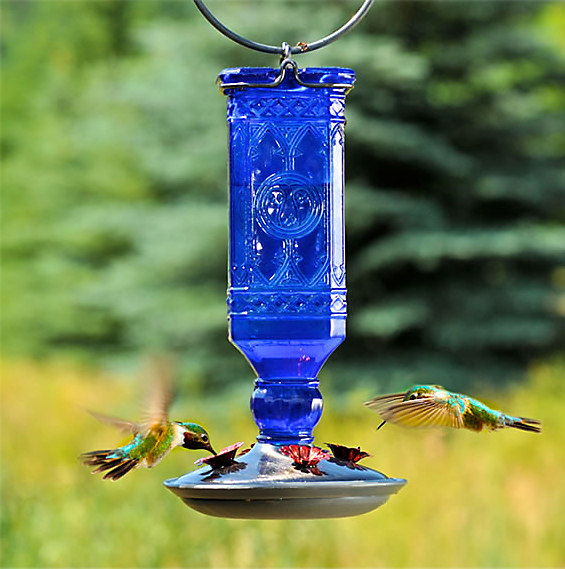 If you add a hummingbird feeder to your yard, make sure you clean it regularly.