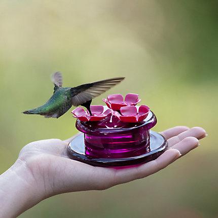 single glass hummingbird feeder)