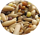 Bird Food MixedSeed