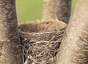 spring bird feeding nests