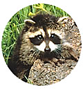 Keeping raccoons and squirrels off feeders