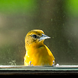 Protecting birds from window collisions