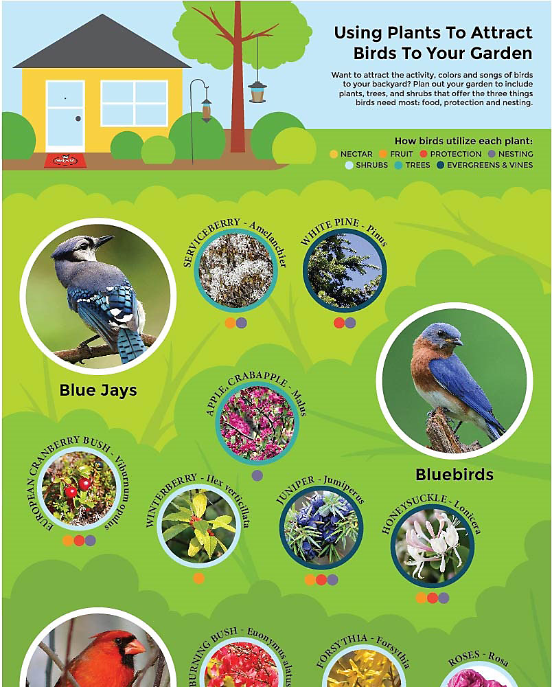 How to Attract Birds to your Garden, Part 1