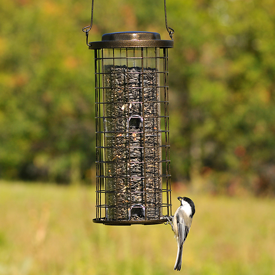 fall bird feeding