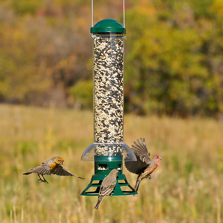 fall bird feeding seed feeders