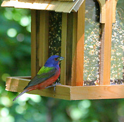 Perky-Pet® Mountain Chapel Wild Bird Feeder
