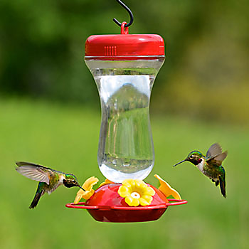 How do Hummingbirds Find Feeders