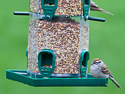 Birdscapes® Grandview Feeder
