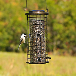 Perky-Pet® Squirrel Stumper™ Wild Bird Feeder