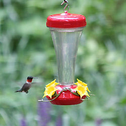 Learn how to clean your hummingbird feeder