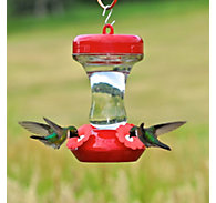 Perky-Pet® Glass Top Fill Hummingbird Feeder - 8 oz Nectar Capacity