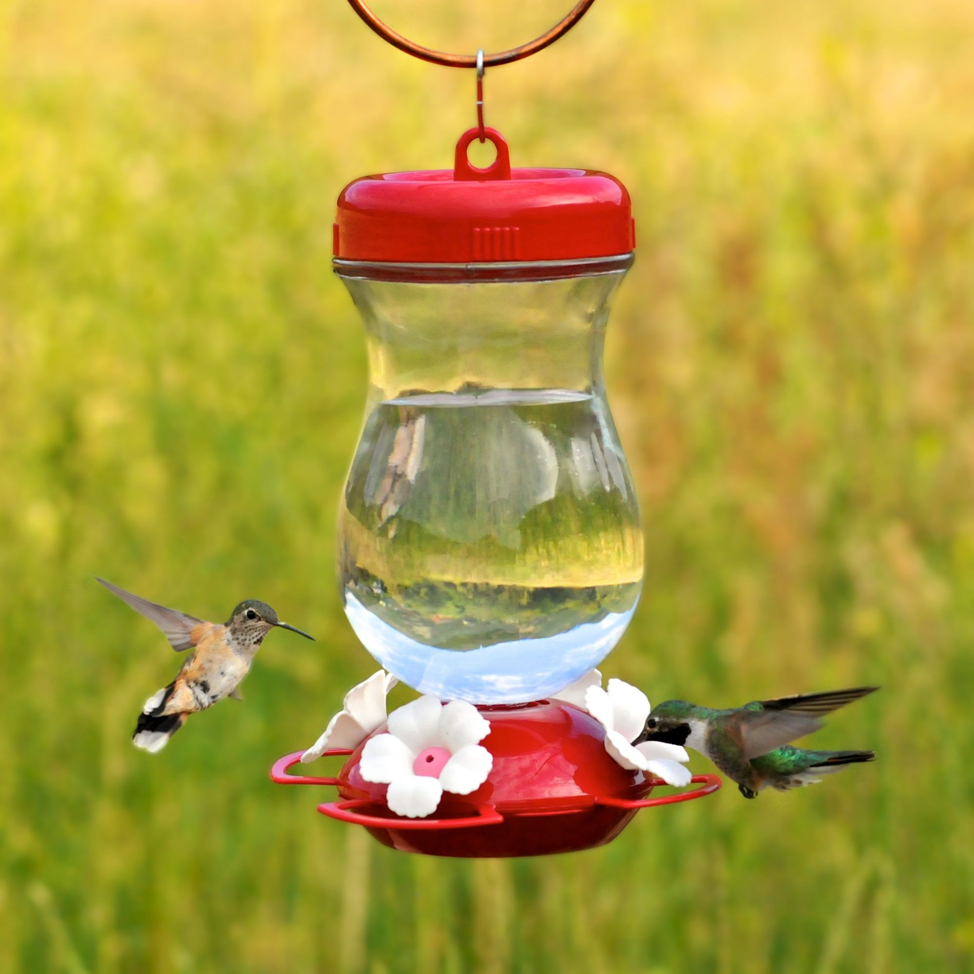 feeder humingbird hummingbird shop grateful fluid egg glass blown red ounces gnome stained best