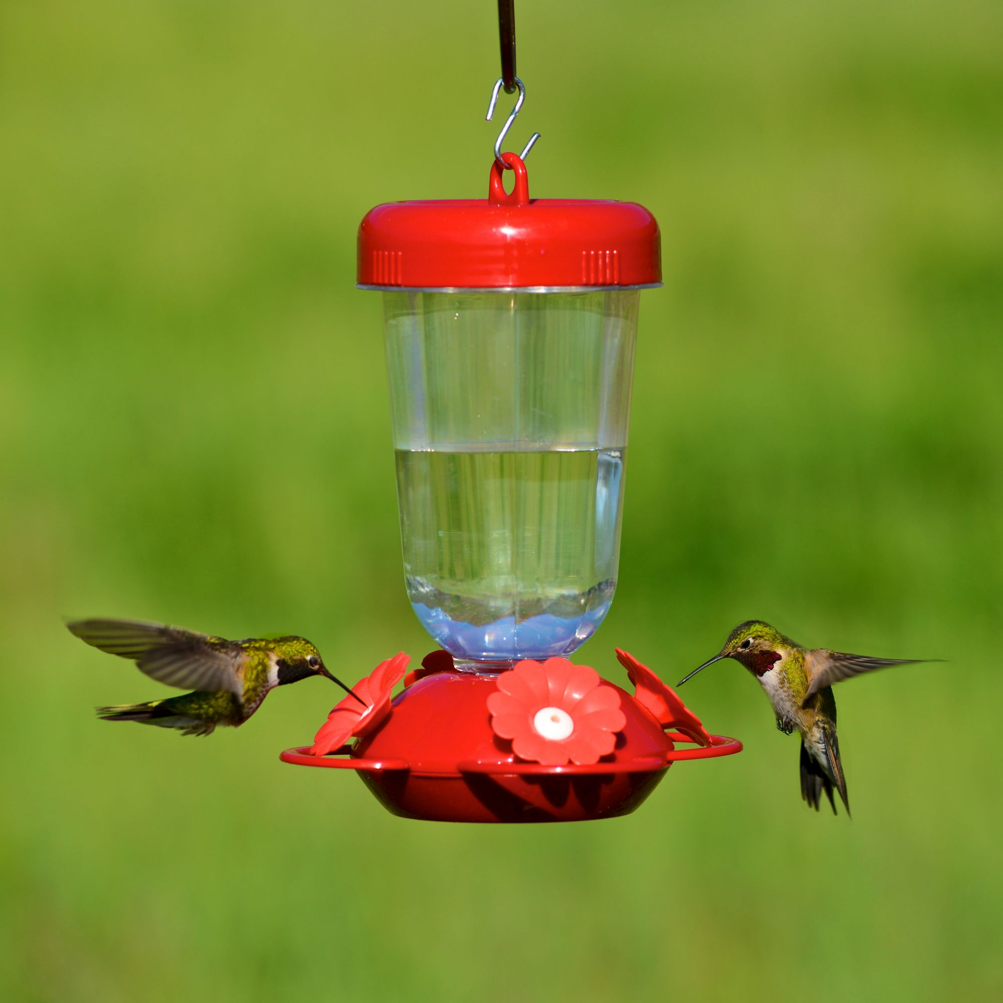 bird with ounces reviews premium red of blown hand decorative product feeders rave hummingbirds yellow nectar by home feeder pet unique best glass birds globe and products natures hummingbird