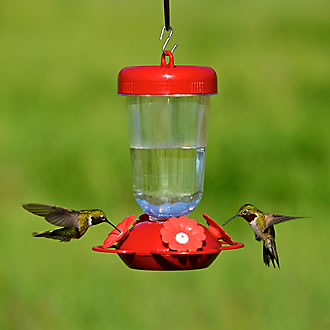 Birds feeding at 135TF