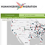 Hummingbird Migration