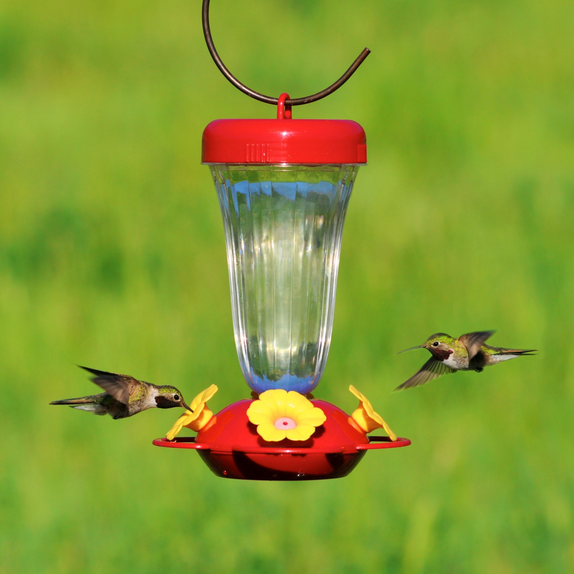 feeders bird hummingbird ounces products red home feeder globe unique best with nectar birds reviews premium and product pet glass by hummingbirds of rave natures blown yellow decorative hand
