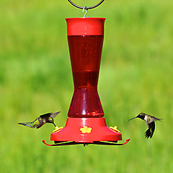 Perky-Pet® Hummingbird Feeder Base with Bee Guards and Perches