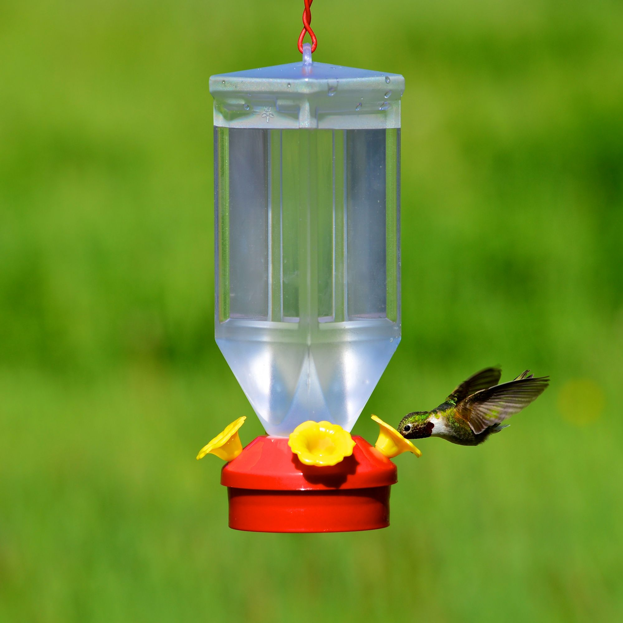 hummingbird glass perky clear decorative bf feeder pet feeders bottle model us antique