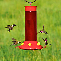 Perky-Pet® Replacement Flower Feeding Ports with Bee Guards