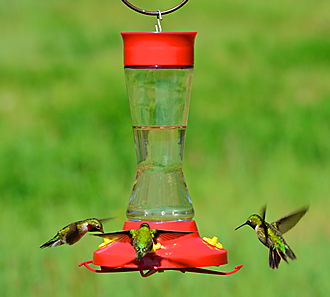 Hardeneed Glass to Monitor Nectar Levels