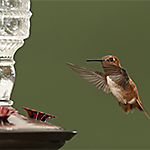 Place Your Hummingbird Feeder