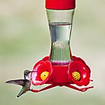 Clean Your Hummingbird Feeder