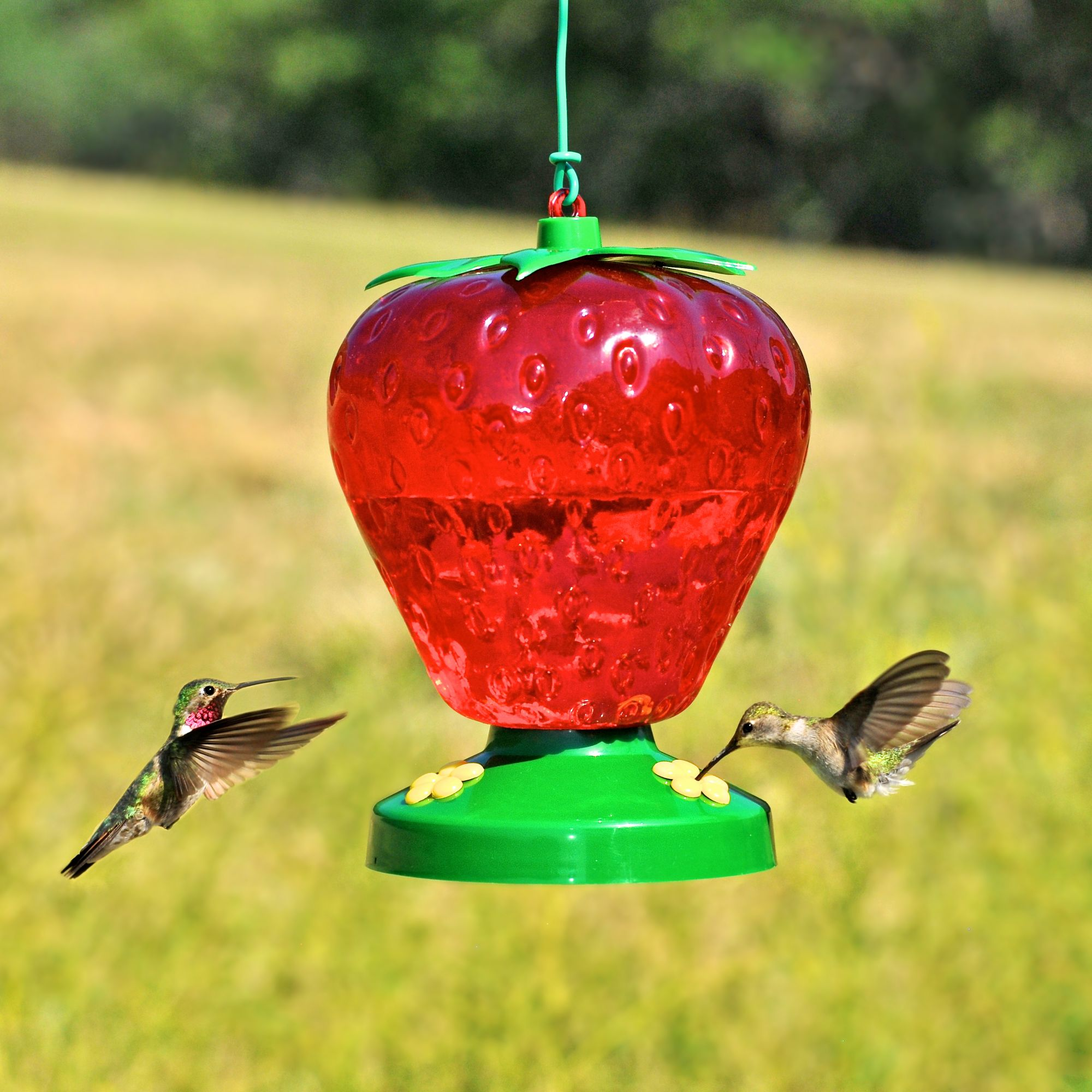 shop stained best red glass grateful egg fluid ounces humingbird hummingbird feeder gnome blown