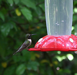 Garden Song® Rose Petal™ hummingbird feeder