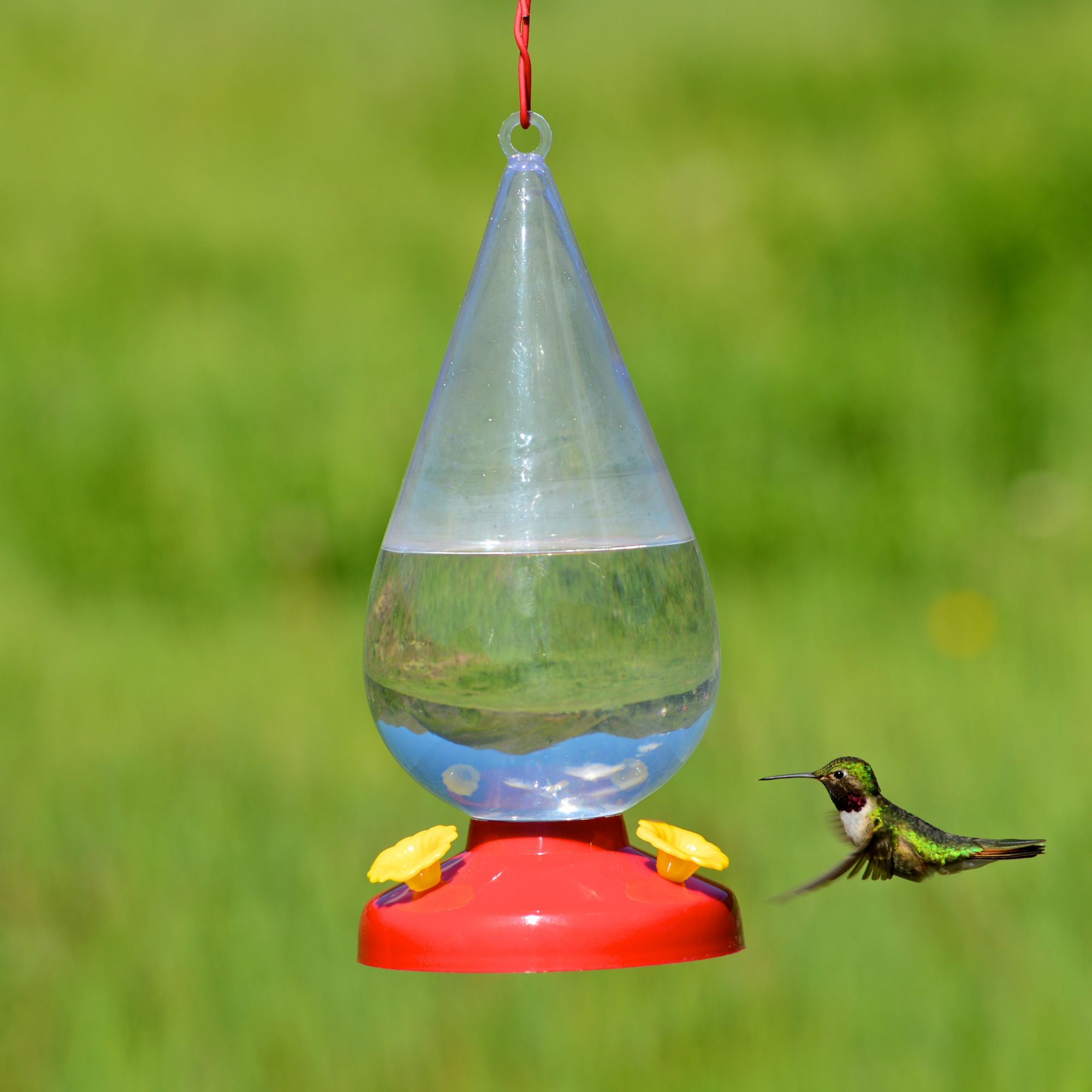 bird to for perches and wikihow a via feeder make decorative gardens hummingbird feeders pin com