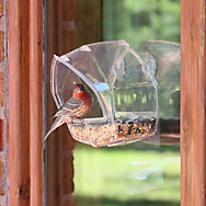 Perky-Pet® Window Feeder