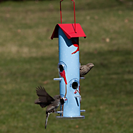 Perky-Pet® Cardinal Metal Tube Bird Feeder