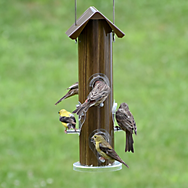 Perky-Pet® Wood-Style Metal Tube Bird Feeder
