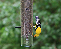 Perky-Pet® Patented Upside Down® Goldfinch Feeder
