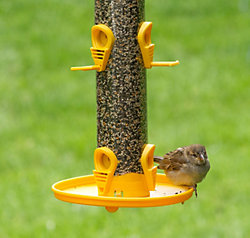 Perky-Pet® Finch Feeder