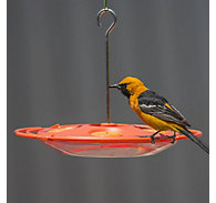 Perky-Pet® Tray Oriole Feeder - 16 oz Nectar Capacity
