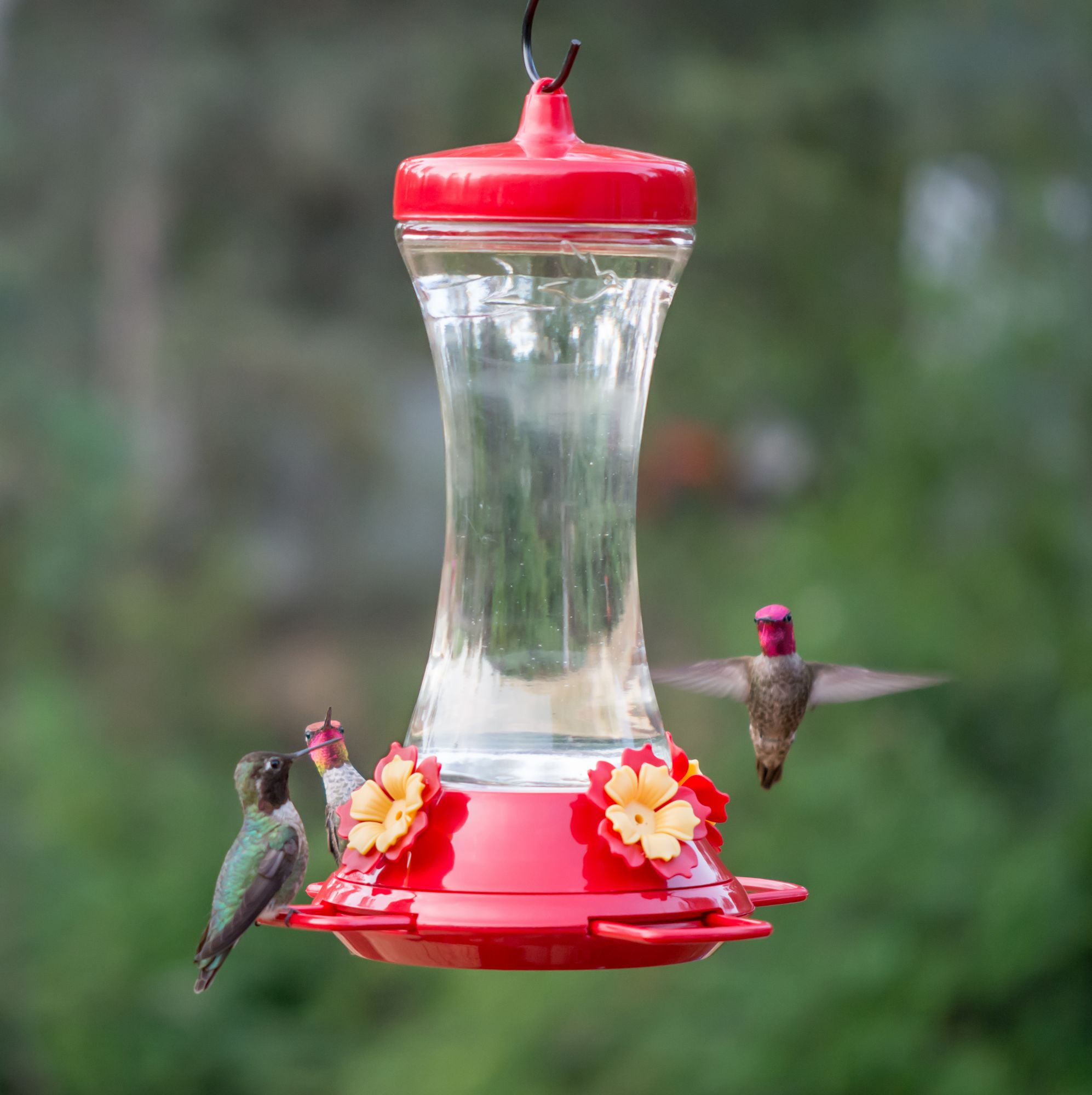 better white walmart hummingbird com lantern homes ip decorative feeder gardens feeders