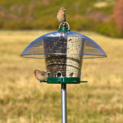 pole for single bird feeder single urlaub 2021